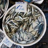 Sardinen für Verkauf lizenzfreie stockfotografie
