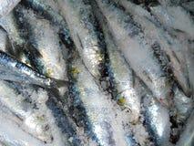 Sardinen im Salz lizenzfreie stockbilder