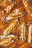 Sardinen mit Tomatensauce stockfotografie