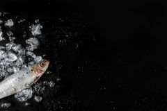 Sardiner på mörk bakgrund Fotografering för Bildbyråer