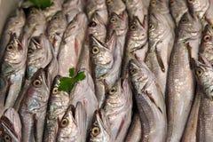 Sardines à un marché extérieur italien Photo libre de droits