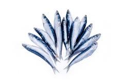 Sardines Stock Photo