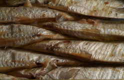 Sardines Stock Photography