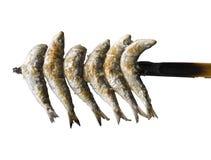 Sardines Stock Photography