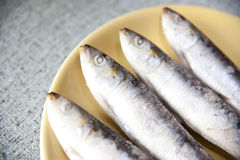 Sardines. Photo of 4 sardines on a yellow plate Royalty Free Stock Photos