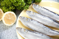 Sardines. Photo of 4 sardines on yellow plate. Parsley and lemon. All placed on a retro style table Stock Images