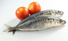 Sardines. Tomatos shoot with white background Stock Photo