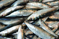 Sardines Royalty Free Stock Photos