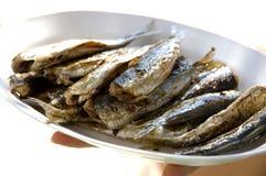 Sardines Royalty Free Stock Photos