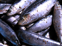 Sardines. Texture Royalty Free Stock Photo