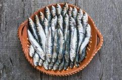 sardines Royalty-vrije Stock Afbeelding
