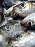 Sardines Images stock