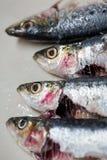 sardines royalty-vrije stock fotografie