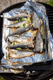 Sardines on the barbecue. Sardines cooking on the barbecue Stock Images