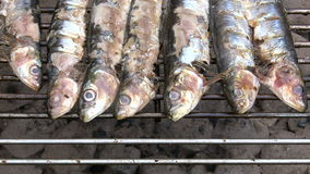 Sardines on the barbecue stock video footage