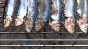 Sardines on the barbecue stock footage