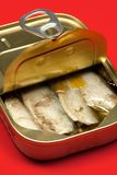 Sardines bidon Image stock