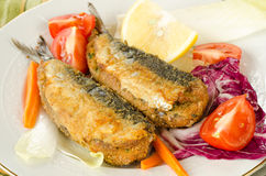 Sardines bourrées Photo libre de droits