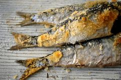 Sardines cook in salt at mediterranean style cooking healthy diet Stock Image
