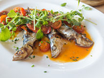 Sardines cooked with tomatoes Stock Photo