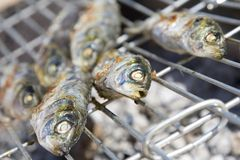 Sardines cooking on barbecue. Sardines being cooked on a charcoal barbecue Royalty Free Stock Photos