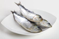 Sardines crues Image stock