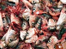 Sardines décapitées Image stock
