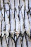 Sardines in de markt Royalty-vrije Stock Afbeelding