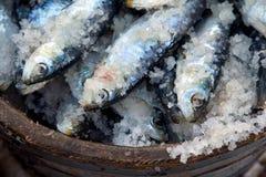 Sardines die in zout worden bewaard Royalty-vrije Stock Foto's