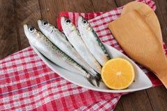 Sardines du plat blanc Photographie stock