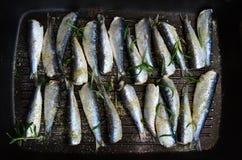Sardines in een pan met kruiden en rozemarijn wordt geroosterd die Royalty-vrije Stock Foto