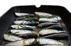 Sardines in een pan met kruiden en rozemarijn wordt geroosterd die Royalty-vrije Stock Fotografie