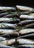 Sardines in een pan met kruiden en rozemarijn wordt geroosterd die Stock Afbeeldingen