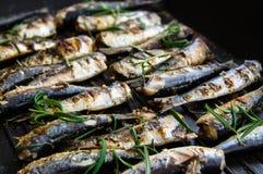Sardines in een pan met kruiden en rozemarijn wordt geroosterd die Stock Foto
