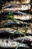 Sardines in een pan met kruiden en rozemarijn wordt geroosterd die Royalty-vrije Stock Foto's