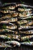 Sardines in een pan met kruiden en rozemarijn wordt geroosterd die Stock Foto's