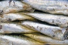 Sardines en boîte Images libres de droits