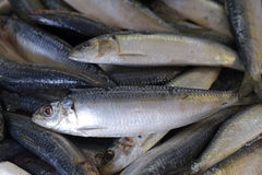 Sardines exposed in fish market Stock Photography