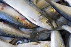 Sardines exposed in fish market Stock Photos