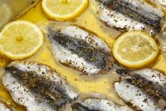 Sardines fillet Stock Image
