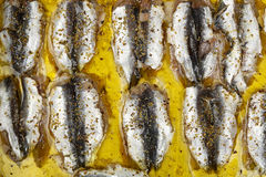 Sardines fillet Royalty Free Stock Photo