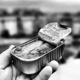 The sardines. Royalty Free Stock Photos