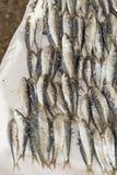 Sardines on fish market Stock Photos