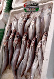 Sardines at a fish market. On ice labeled Bacaladitos - a type of fish, not a brand or logo Stock Image
