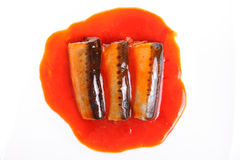 Sardines fish in tomato sauce Stock Image