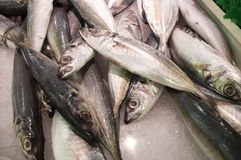 Sardines Fish at Wet Market Royalty Free Stock Photography