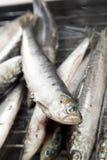 Sardines fraîches images libres de droits
