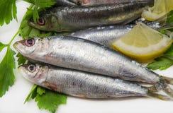 Sardines fraîches Photos libres de droits
