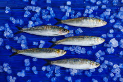 Sardines fresh fishes on ice Royalty Free Stock Images