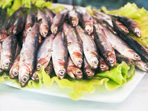 Sardines. Fresh small fish: anchovy, sardines, sprat Stock Photography